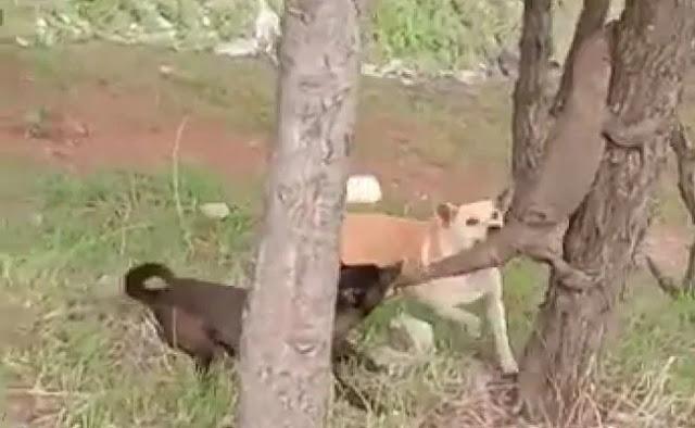 पेड़ पर चढ़ी थी जंगली छिपकली, कुत्ते ने जबड़े से पूंछ पकड़कर करना चाहा शिकार... देखें Video