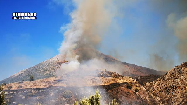 Σε εξέλιξη η πυρκαγιά στις Μυκήνες - Φόβοι μην περάσει το βουνό
