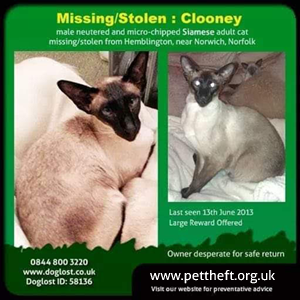 Stolen cat Clooney graphic  shared on PetTheft.org.uk