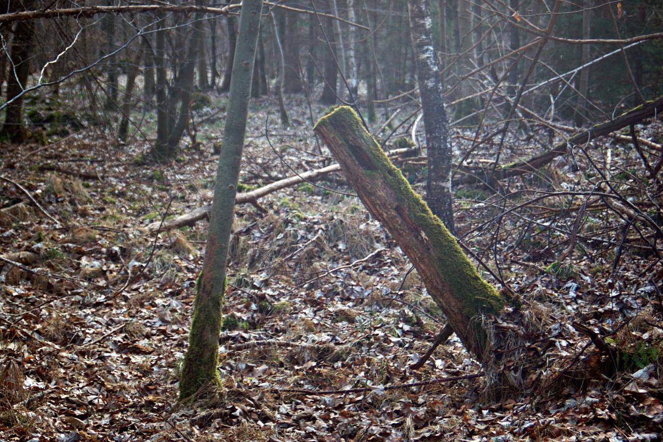 Nochmal im Wald unterwegs
