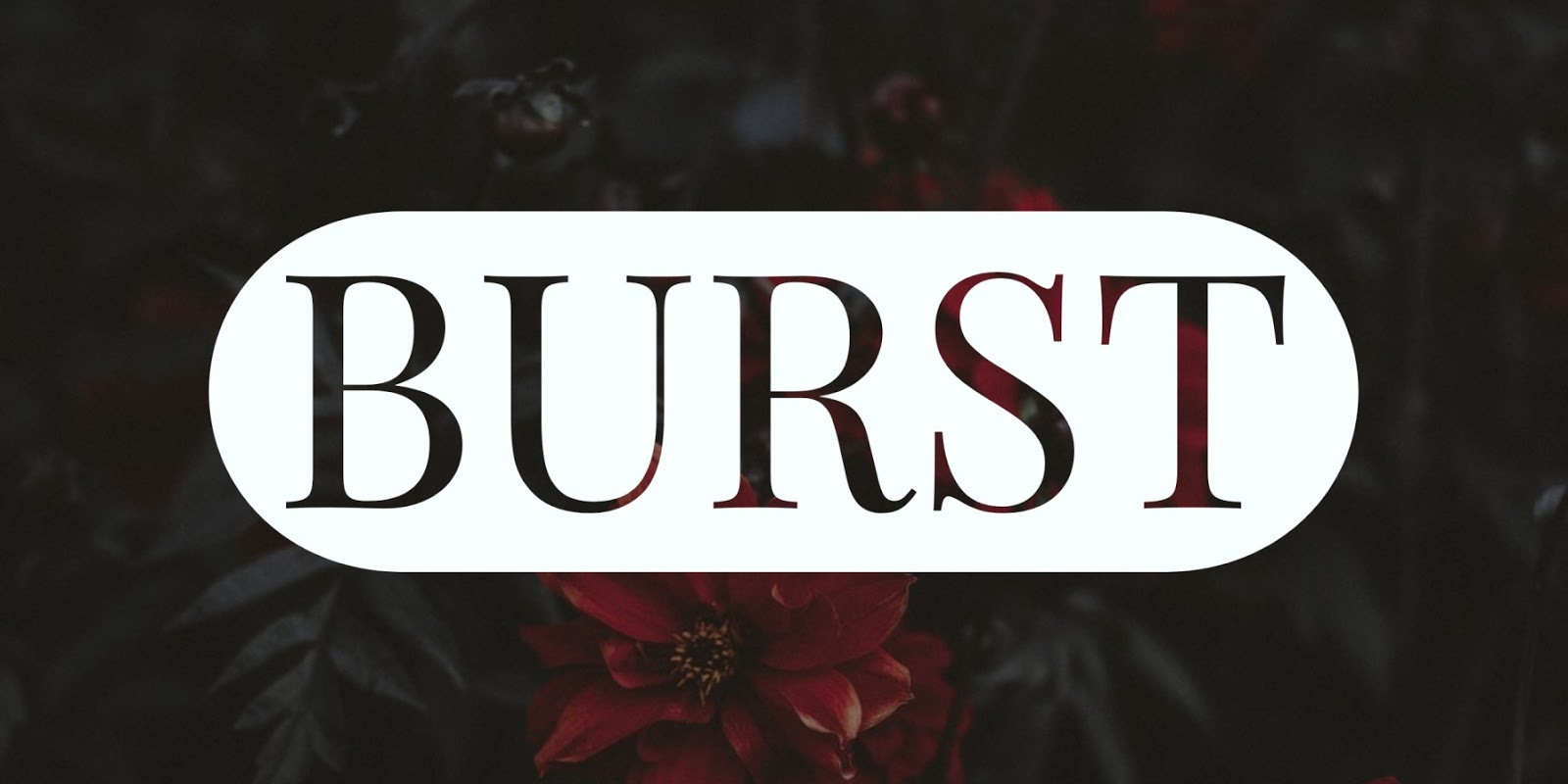 Burst - Free Stock Photography Images Sites