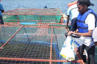 Lake View Fisheries,Kenya: A startup for fresh fish