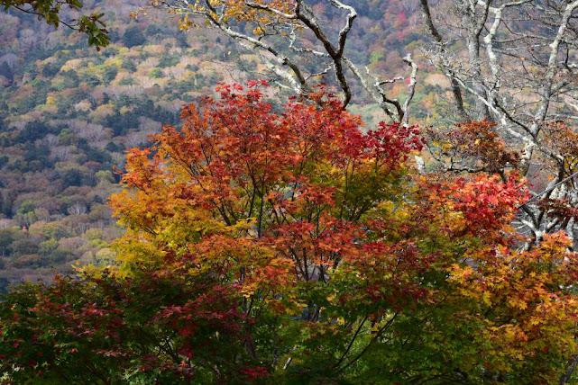 中禅寺湖湖畔の紅葉(4)