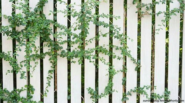 plants for fence decoration