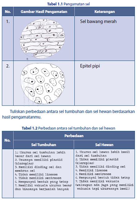 Membandingan sel tumbuhan dan sel Hewan