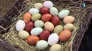 Ein Ei Legen