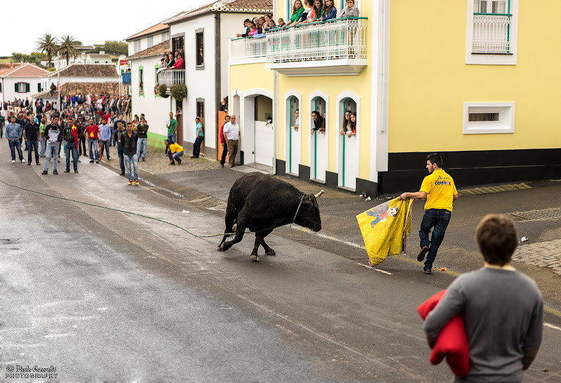 Tourada à corda, Terceira
