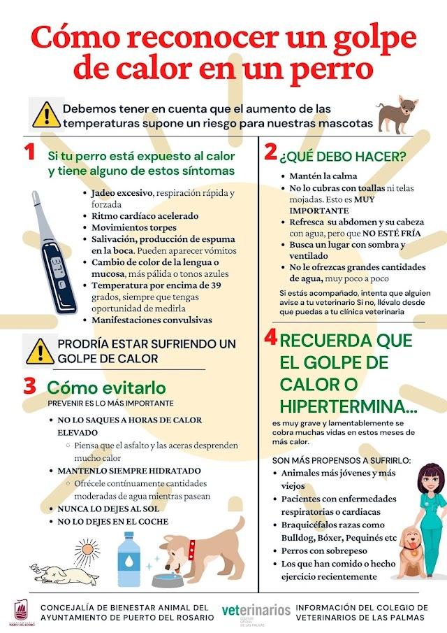 Puerto del Rosario lanza campaña para recordar la importancia de proteger a las mascotas de los golpes de calor