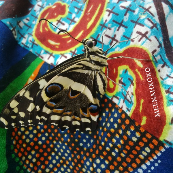 butterflies and african prints