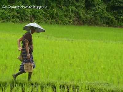 Trekking risaia
