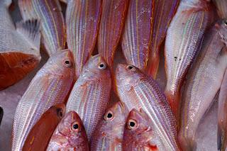 Ikan Berlemak
