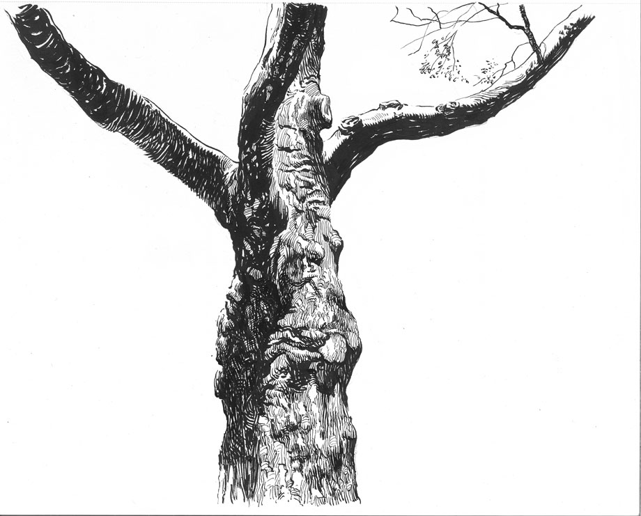 It is a photo of Hilaire Tree Pen Drawing