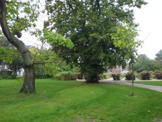 Jardines en el Botanisk Have