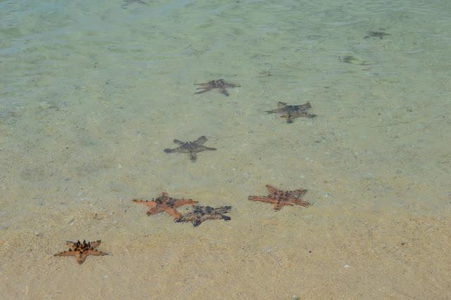 Zambales Marine Life