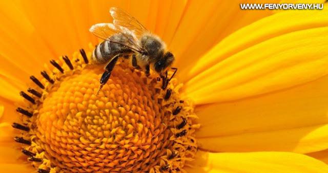 A méheket a világ legfontosabb élőlényeinek nyilvánították