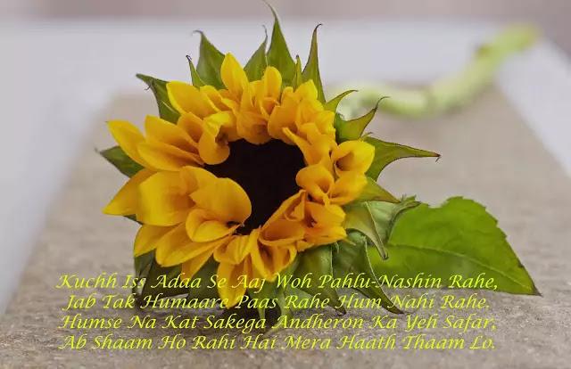 urdu shayari with images hd