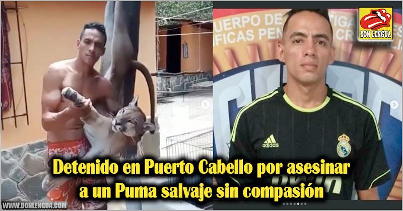 Detenido en Puerto Cabello por asesinar a un Puma salvaje sin compasión