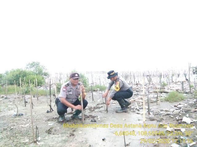 Kapolsek Gunung Jati Perintahkan Anggotanya Cek Pohon Mangruv di Pantai Klayan