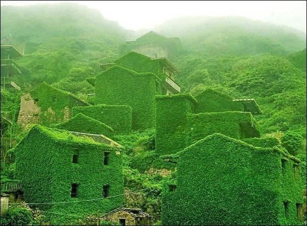 vila de casas tomada pela vegetação