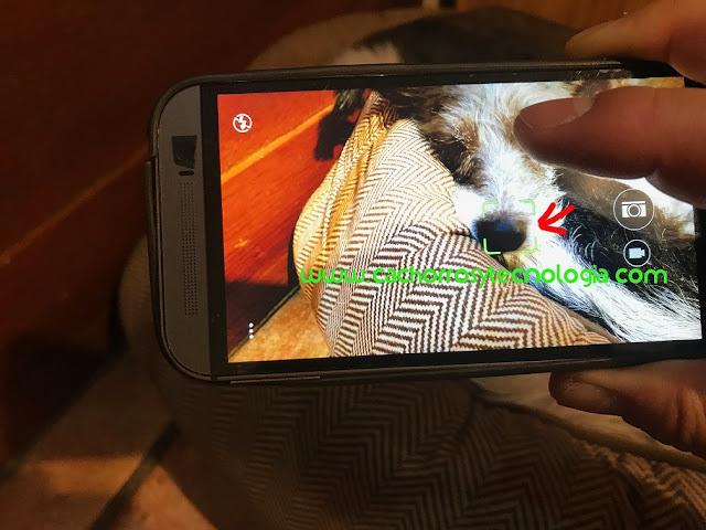 Gala nariz perro dog huella dactilar puppy cachorro shurlonrad tecnologia nose Megvii APP