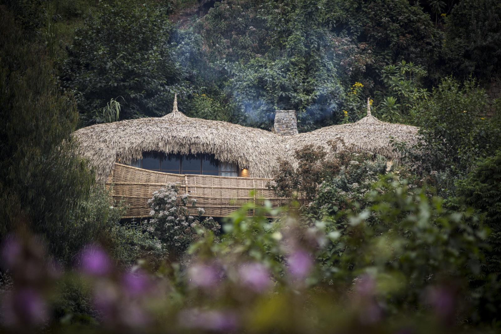 Bisate Lodge, Rwanda's indigenous trees