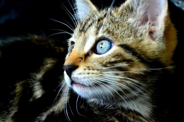 Cat, baby, kitten