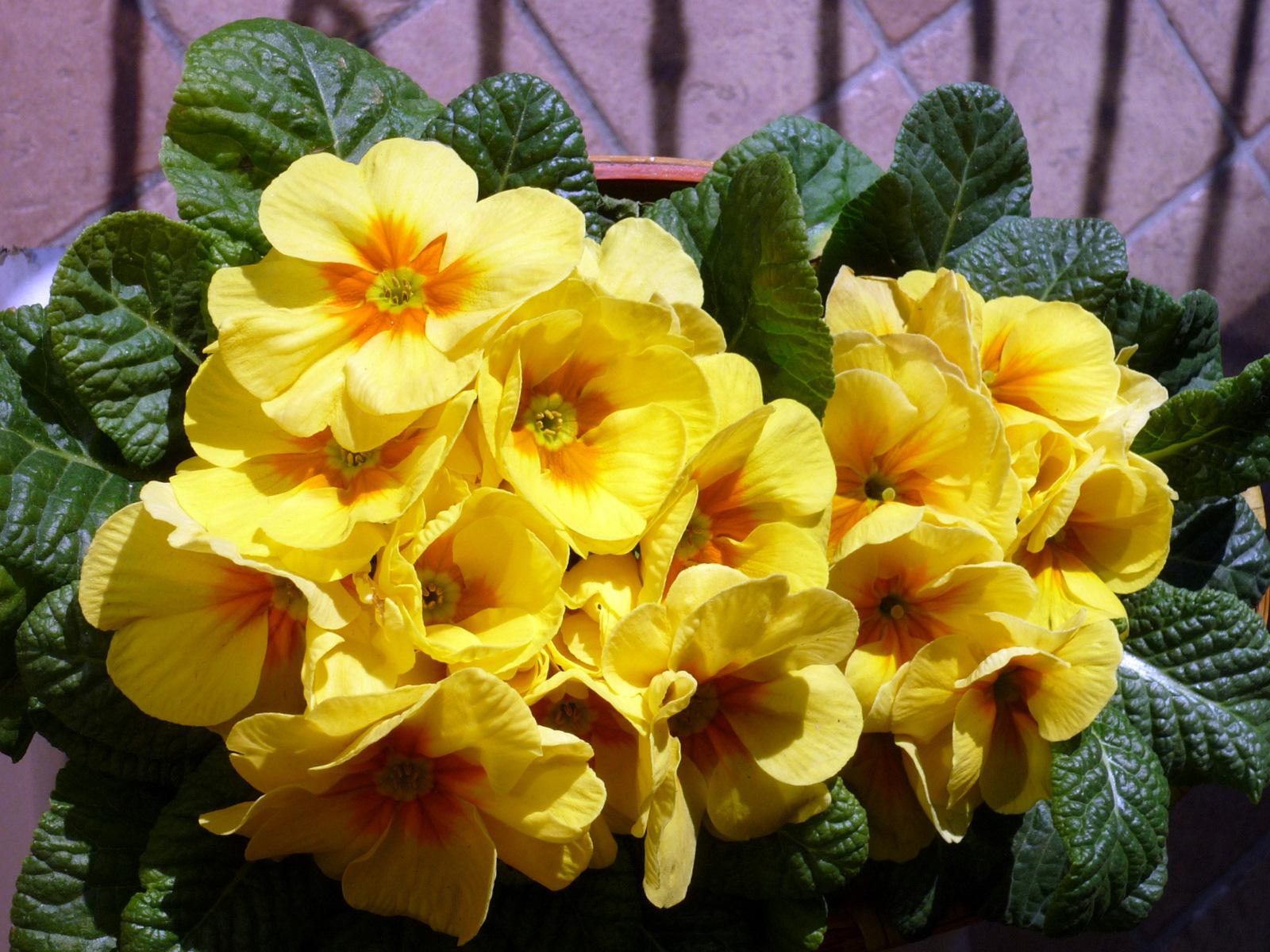 Maestra caterina lapbook fiori di primavera for Fiori di primavera