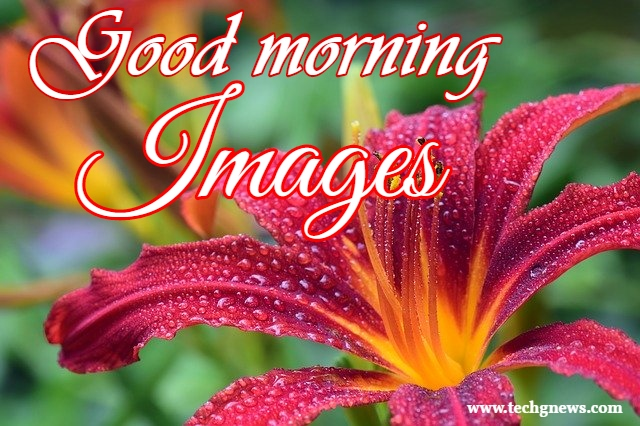 Good morning images flower