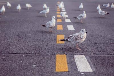 Birds depicting higher communication
