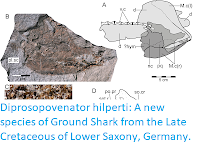 http://sciencythoughts.blogspot.com/2019/05/diprosopovenator-hilperti-new-species.html