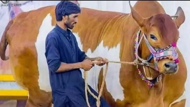 Qurbani-K-Janwar,