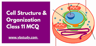 Cell Structure and Organization MCQ