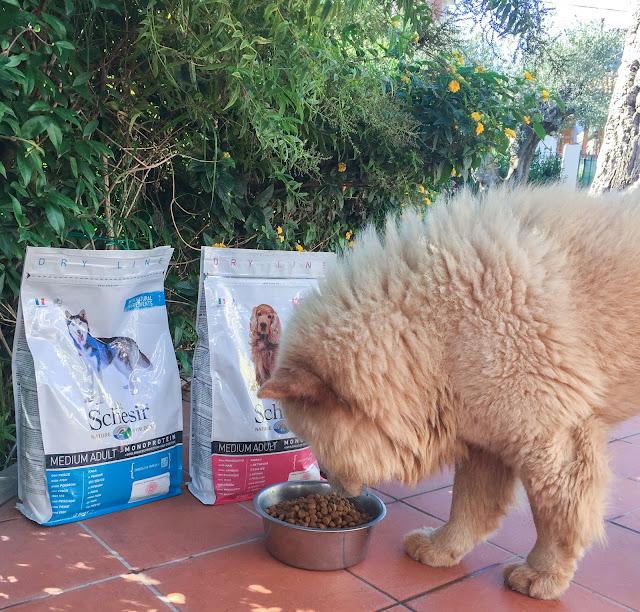 schesir crocchette per cani e gatti