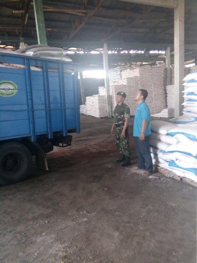 Babinsa 25/Gadingrejo Pantau Pupuk Bersubsidi Di Wilayah Binaannya