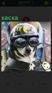 Изображение собаки в каске и в очках с ошейником и медалями
