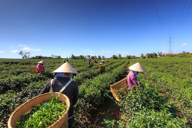 Ouvrier saisonnier agricole