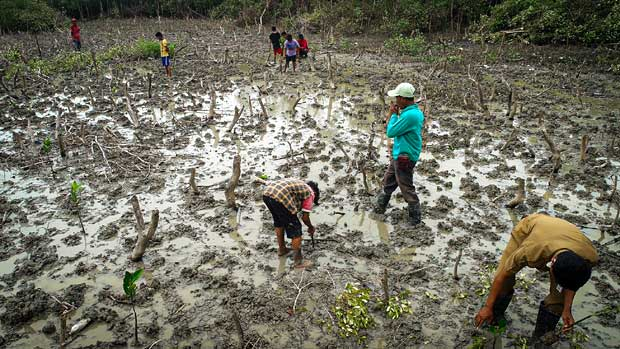 azizi mangrove pantai sejarah sumut