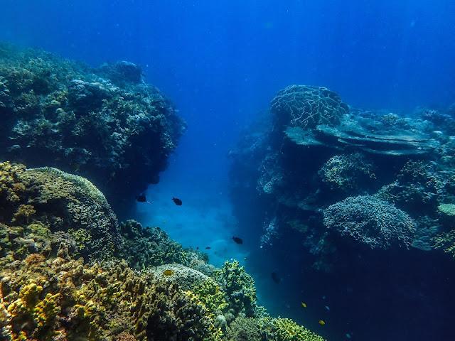 Cebu   Dive at Kuya Jom's Crib, Catmon