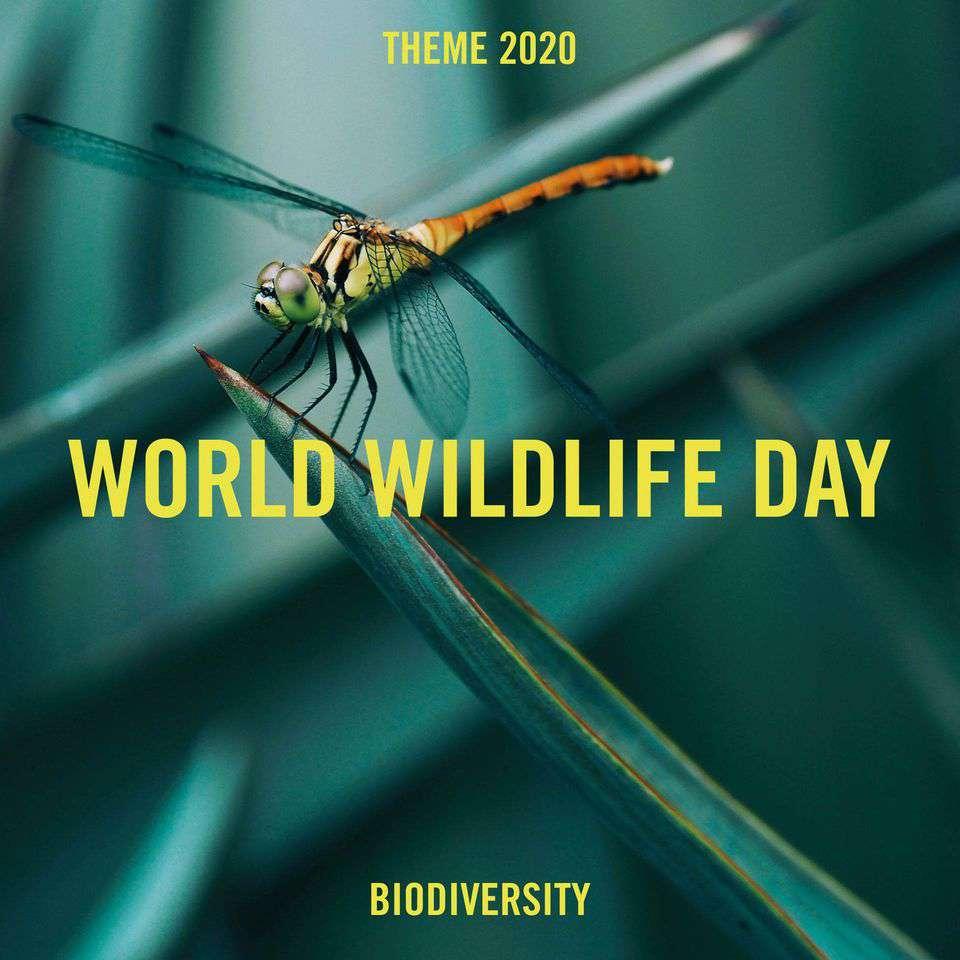 World Wildlife Day Wishes Beautiful Image