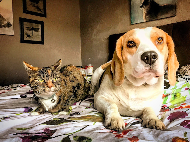 Cat Vs Dog, Man vs Woman, the problem with dating, dating, online dating, relationships, mandy charlton, photographer, writer, blogger