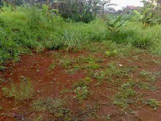 Tahapan Perkembangan Tanah