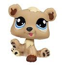 Littlest Pet Shop Petriplets Bear (#1555) Pet