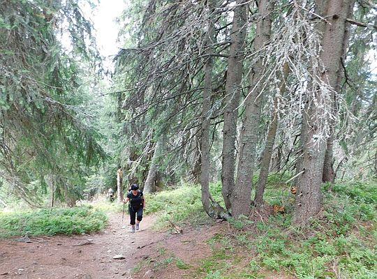 Przez sędziwy las.