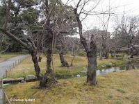 Stream and path - Shosei-en Garden, Kyoto, Japan