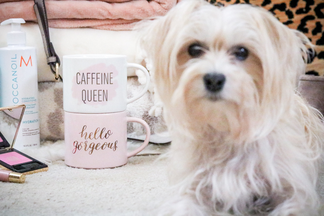 morkie with target stackable mugs