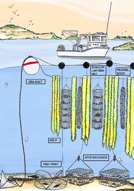 La culture d'algues géantes pour nourrir les poissons, les hommes et réguler le climat