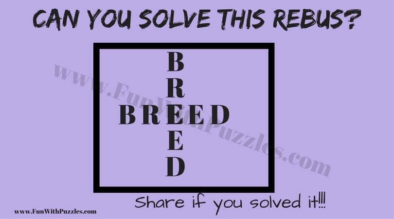 Hidden Meaning Brain Puzzles With Answers