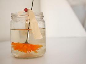tutorial to grow borax crystals on flowers