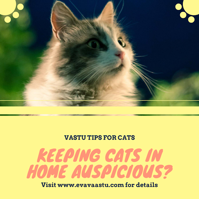 Vastu Tips for Cat |  वास्तु अनुसार घर में बिल्ली रखना शुभ ?