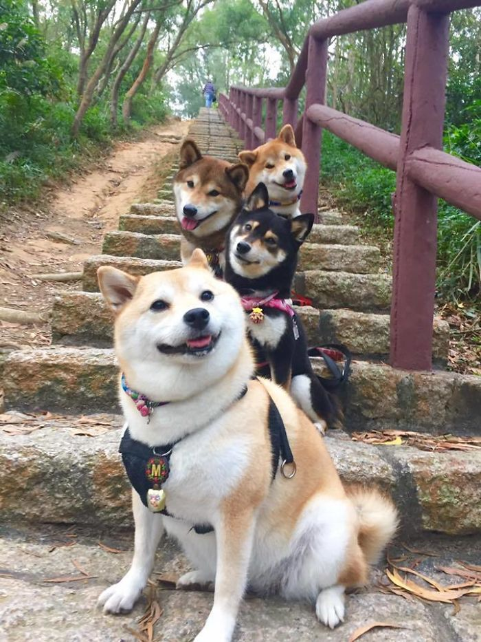 32 Animals That Look Like They're About To Drop The Hottest Albums Of The Year - These Doges Are About To Drop The Most Fire Album Of 2017